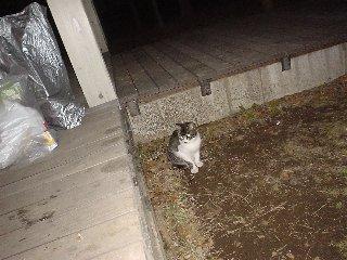 研究室の周りにいる猫も鍋を食べたそうだった