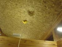 DNPハウスにまた巨大蜂現る